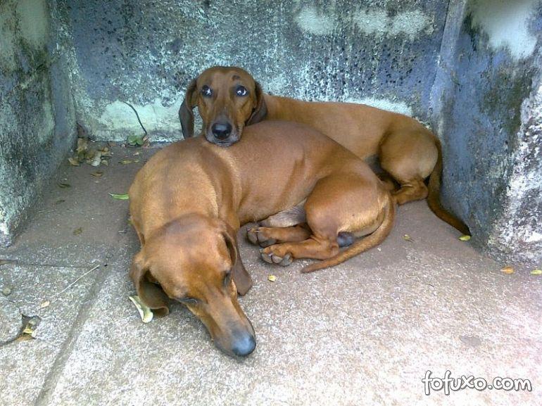 Projeto coloca cães abandonados para levando pessoas solitárias para passear