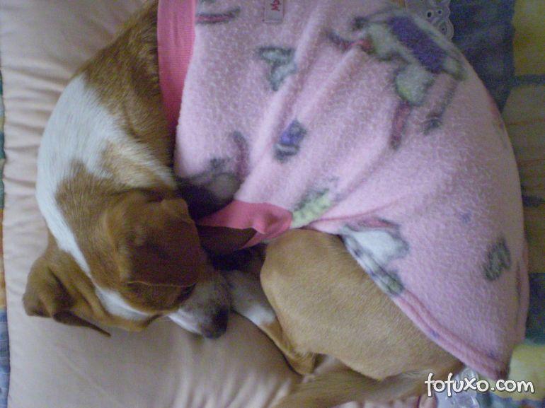 Por que o meu cão dorme demais?