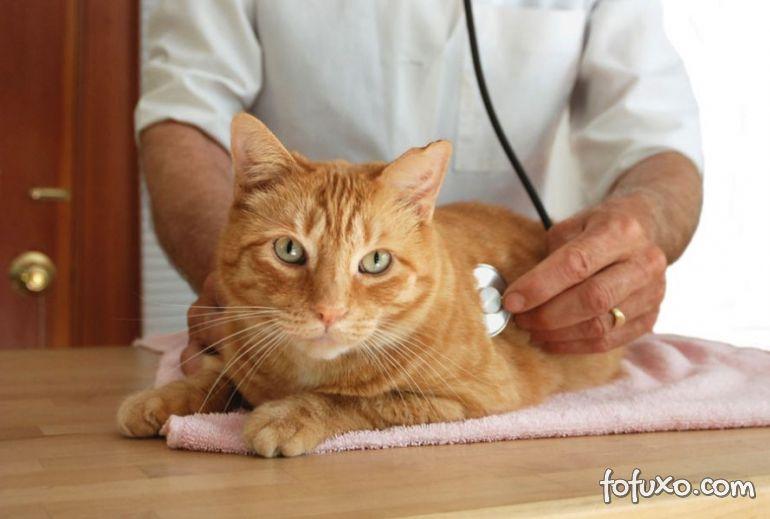 Gatos também podem sofrer de Leucemia