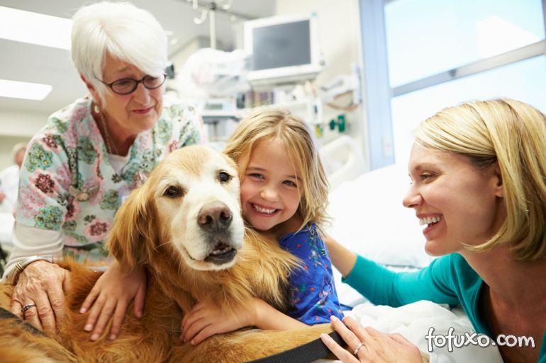 Saiba como cuidar de cães com diabetes