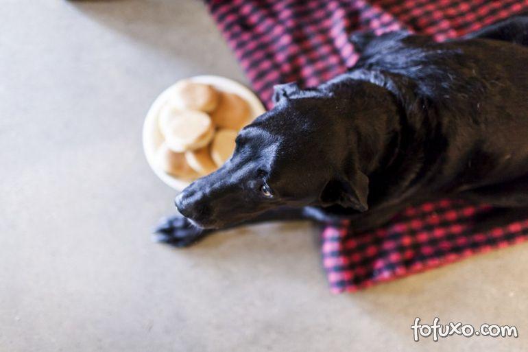 Família registra história emocionante de último dia de vida de cão 3