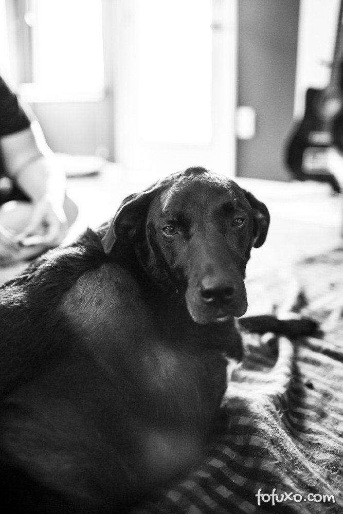 Família registra história emocionante de último dia de vida de cão 5