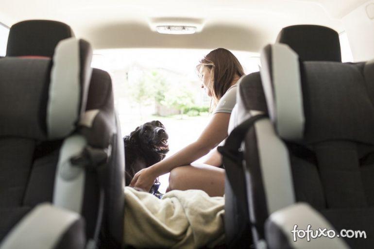 Família registra história emocionante de último dia de vida de cão 9