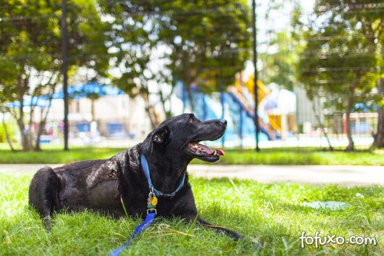 Família registra história emocionante de último dia de vida de cão 15