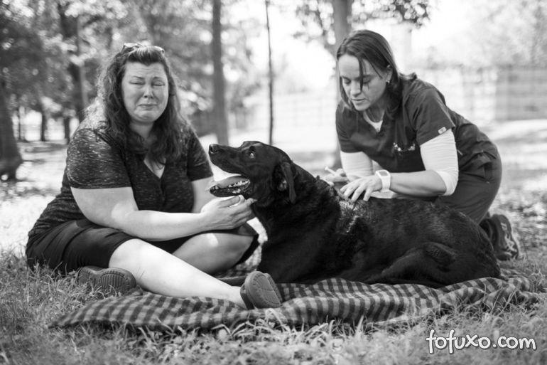 Família registra história emocionante de último dia de vida de cão 17