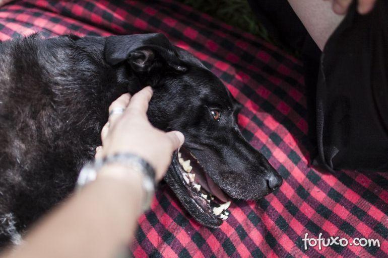 Família registra história emocionante de último dia de vida de cão 18