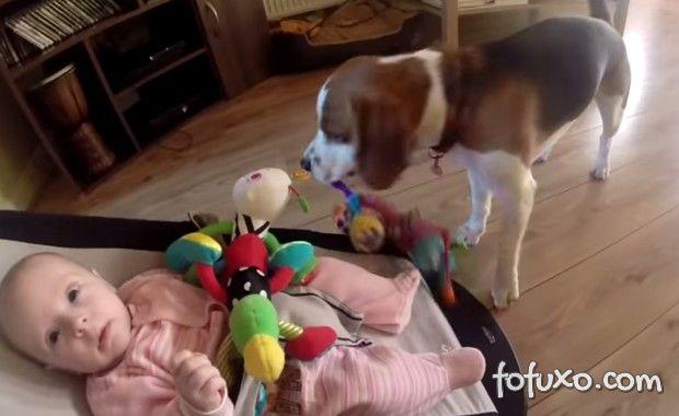Cão pede desculpas por brinquedo roubado e bomba na web