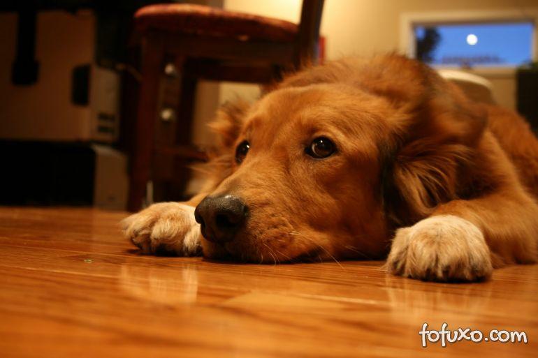 Como funciona o tempo para os cães?