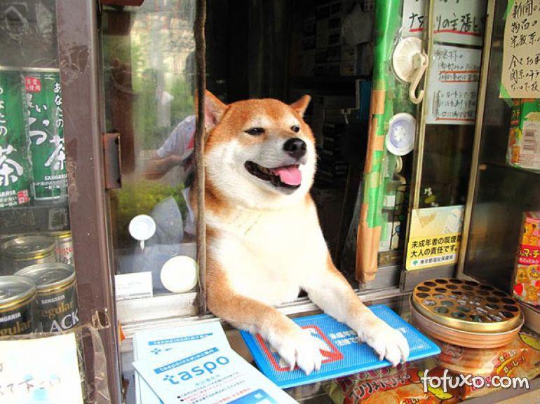 """Vídeo mostra cachorro que """"trabalha"""" em uma loja de cigarros"""