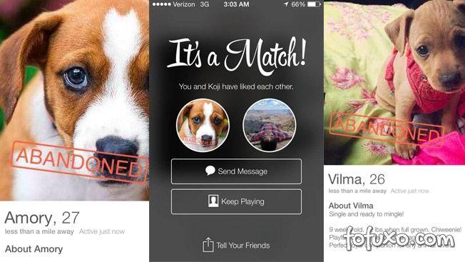 Aplicativo Tinder começa a ser utilizado em NY para incentivar adoção de animais