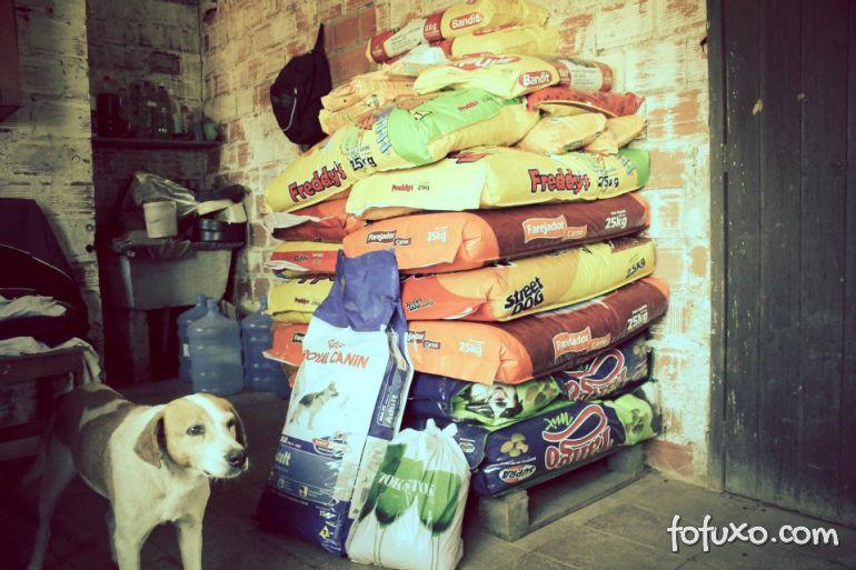 Jovem cria projeto de arrecadação de comida para pets abandonados no RS