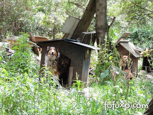 ONG que deveria proteger cães abandonados é fechada por maus-tratos