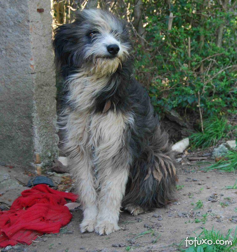 Cães ganham chips gratuitamente em cidade do Rio Grande do Sul