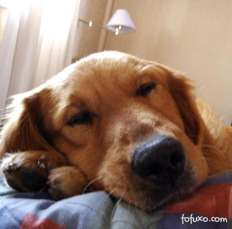 Confira opções para deixar o seu cão mais tranquilo