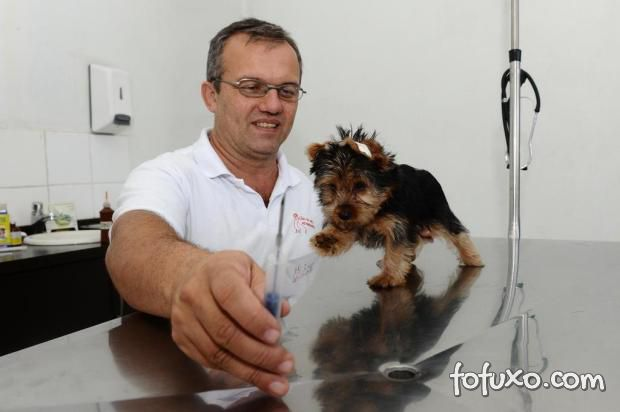 Campo Grande (MS) sanciona lei dos microchips para pets