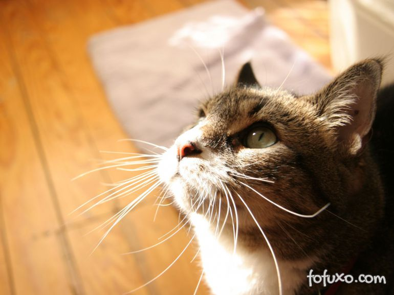 Entenda a importância do sol para os pets