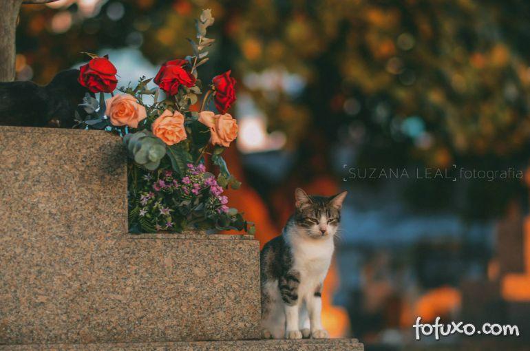 Confira ensaio com gatos em cemitérios - Foto 1