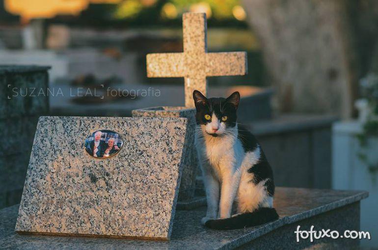 Confira ensaio com gatos em cemitérios - Foto 2