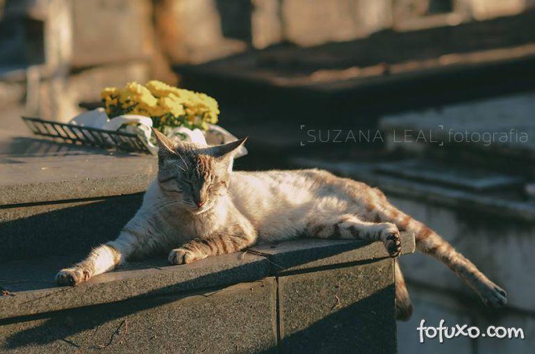 Confira ensaio com gatos em cemitérios - Foto 3