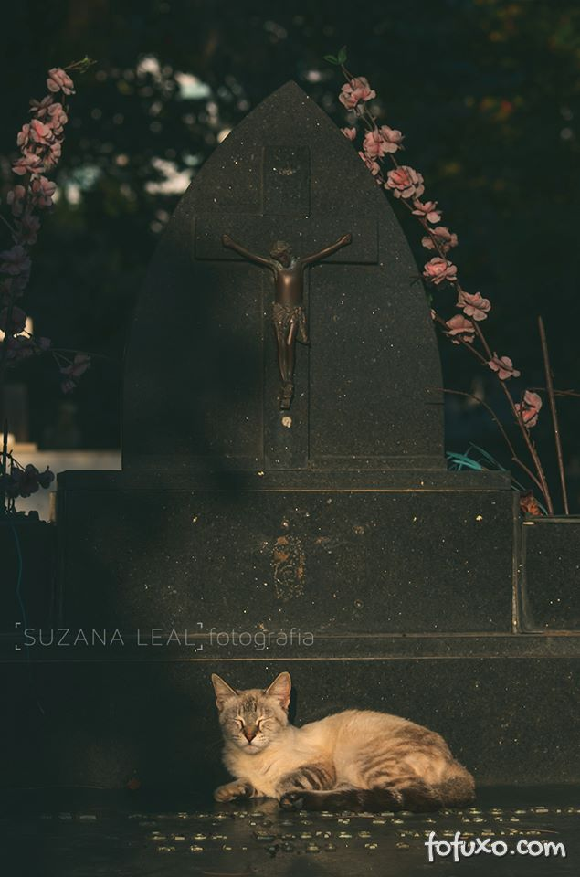 Confira ensaio com gatos em cemitérios - Foto 4