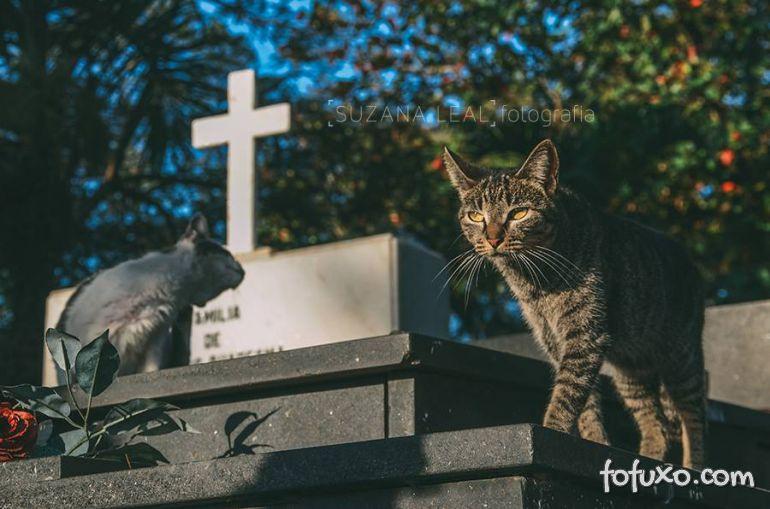 Confira ensaio com gatos em cemitérios - Foto 5