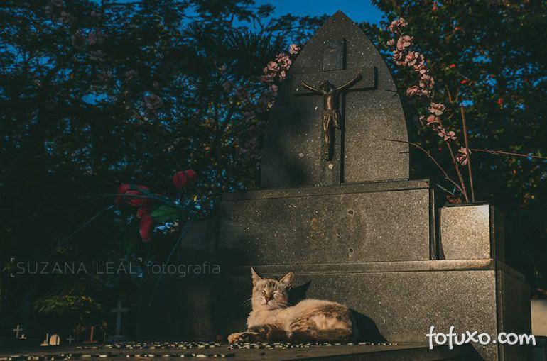 Confira ensaio com gatos em cemitérios - Foto 6