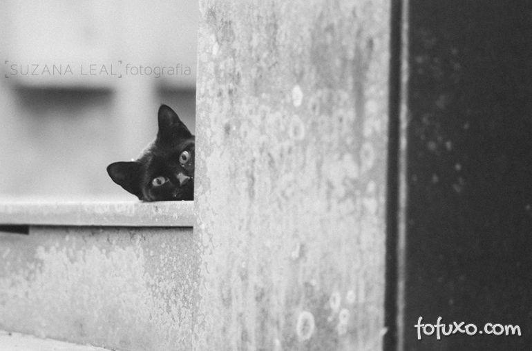 Confira ensaio com gatos em cemitérios - Foto 7