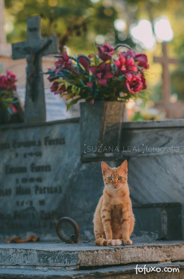 Confira ensaio com gatos em cemitérios - Foto 8