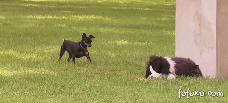Veja cachorros caindo em pegadinha com cão de pelúcia