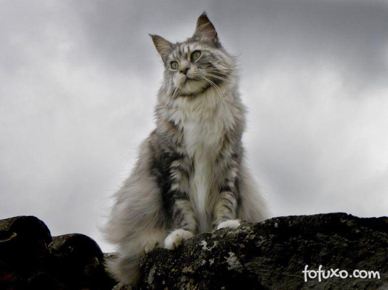 Salvador terá exposição de gatos no próximo final de semana