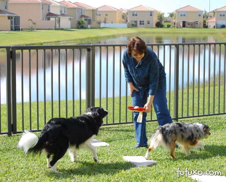 Cuidar de cães e gatos pode se tornar um negócio lucrativo