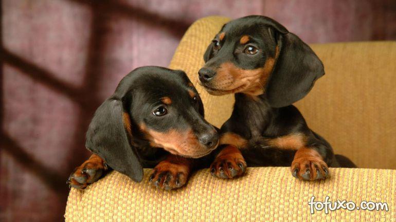 Dicas na hora da reprodução de cães
