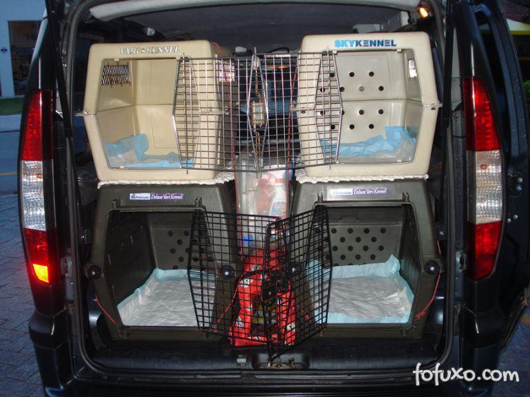 Serviços de táxi para pets ganham espaço nas grandes cidades
