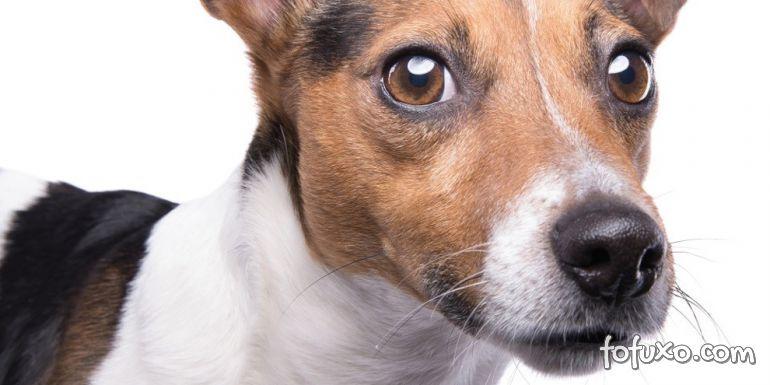 Por que os cães possuem bigodes?
