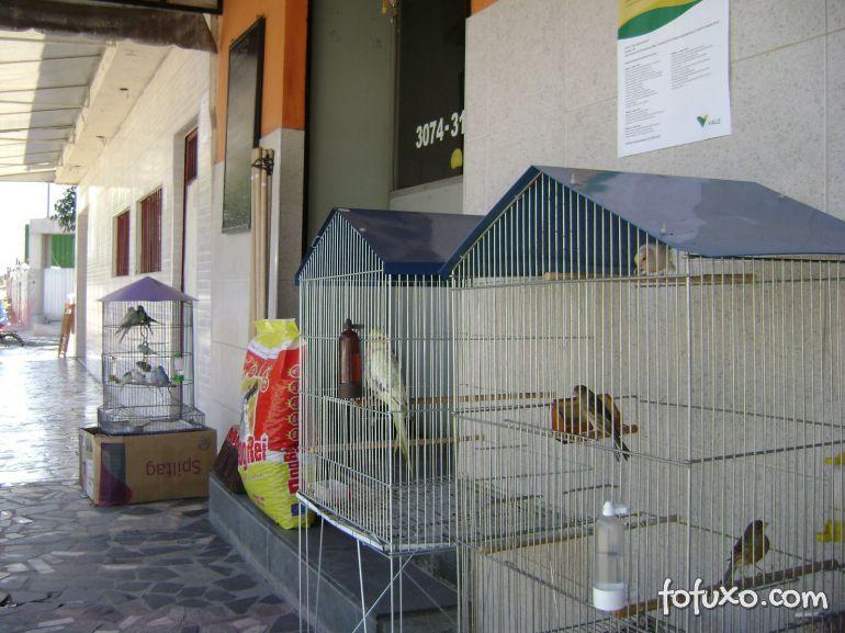 Pets poderão deixar de ser vendidos em lojas