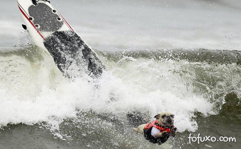 Cães na crista da onda - Foto 1