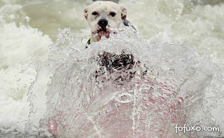 Cães na crista da onda - Foto 4