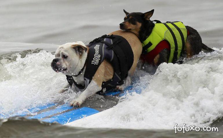 Cães na crista da onda - Foto 5