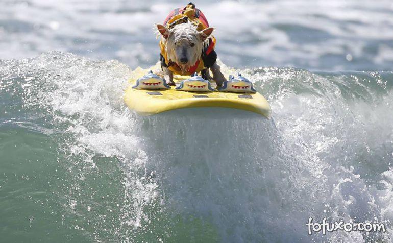 Cães na crista da onda - Foto 7