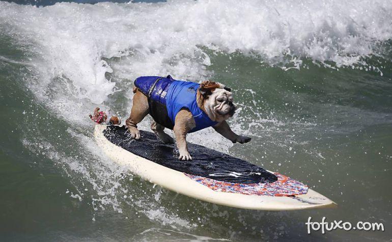 Cães na crista da onda - Foto 8