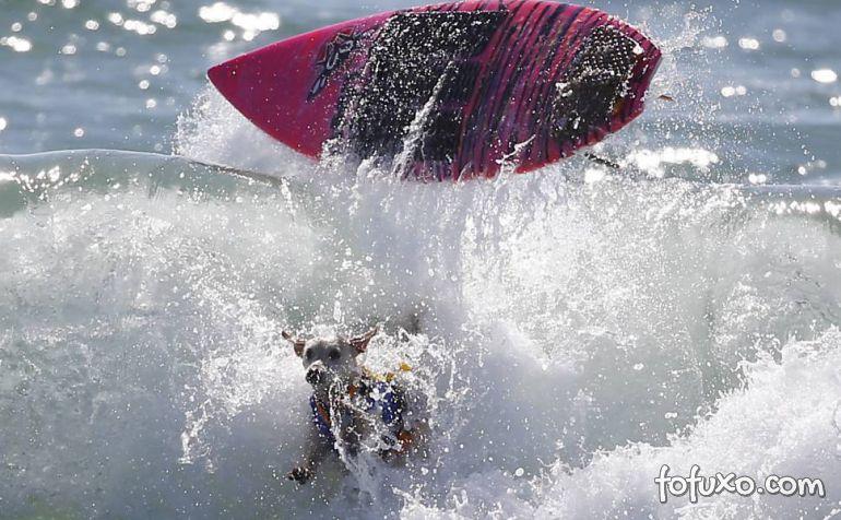 Cães na crista da onda - Foto 9