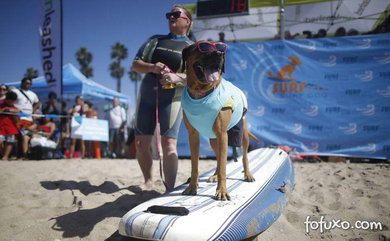 Cães na crista da onda - Foto 10