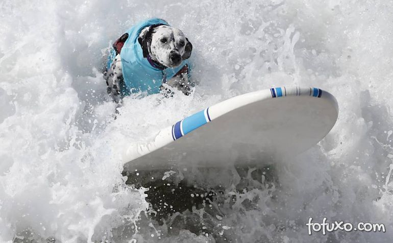 Cães na crista da onda - Foto 11