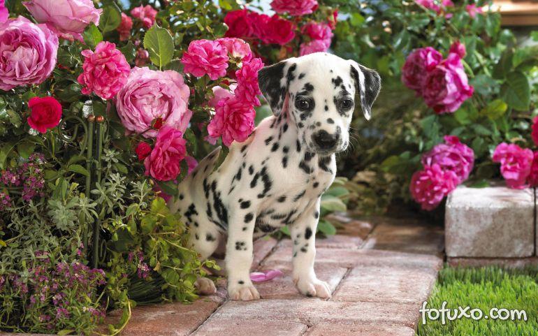 Cães também podem sofrer com alergias na primavera
