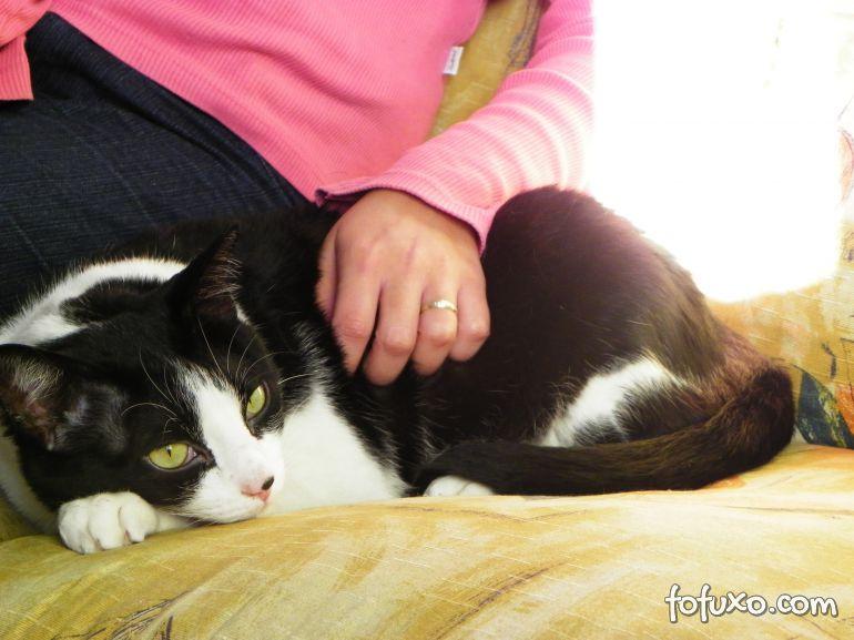 """Estudos afirmam que gatos não gostam de """"carinho em excesso"""""""