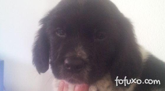 Cachorro abandonado por suspeita de estar com ebola foi adotado