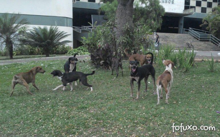 Paraná tem sete cachorros para cada gato