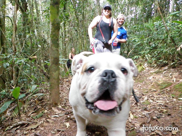 Confira dicas para levar cães em passeios off road