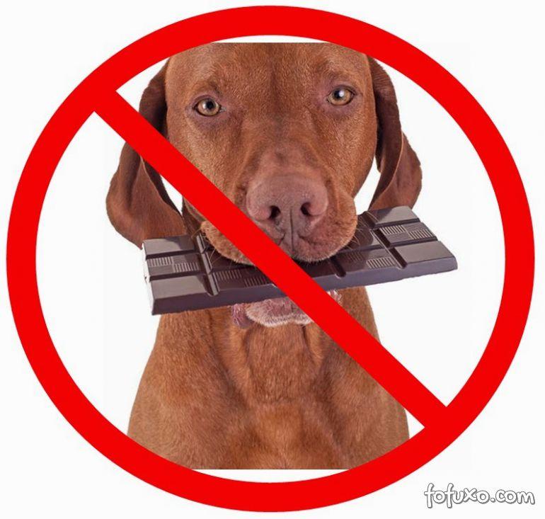 O que fazer quando o cão come chocolate?