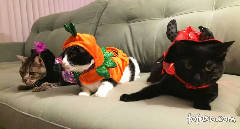 Cachorros e gatos também comemoram o Halloween - Foto 2